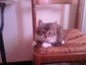 la petite histoire de mes chats 01210