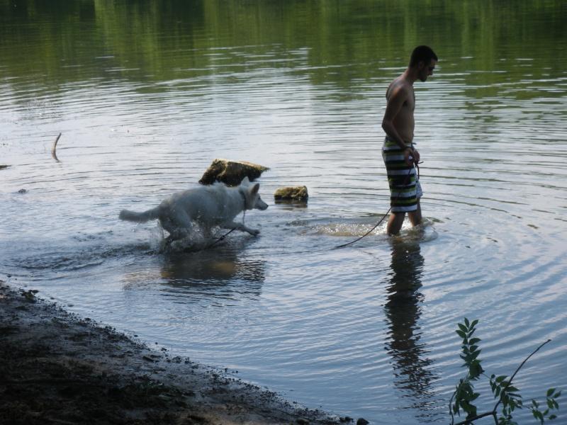 chiens et piscines Imgp4814