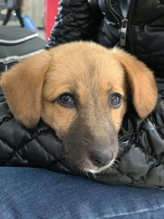 MIEL née le 20/11/2018 - F - Adoptée département 67 52453310