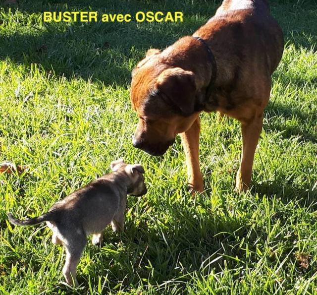 BUSTER - né le 01/05/2017 - M - adopté département 38 Buster19