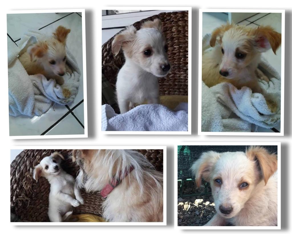 LOULA née le 01/07/2018 - F -  Adoptée département 27 Loula_11