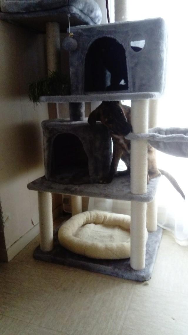 NESSY née le 20/06/2018 - F  - Adoptée département 14 Nessy_13