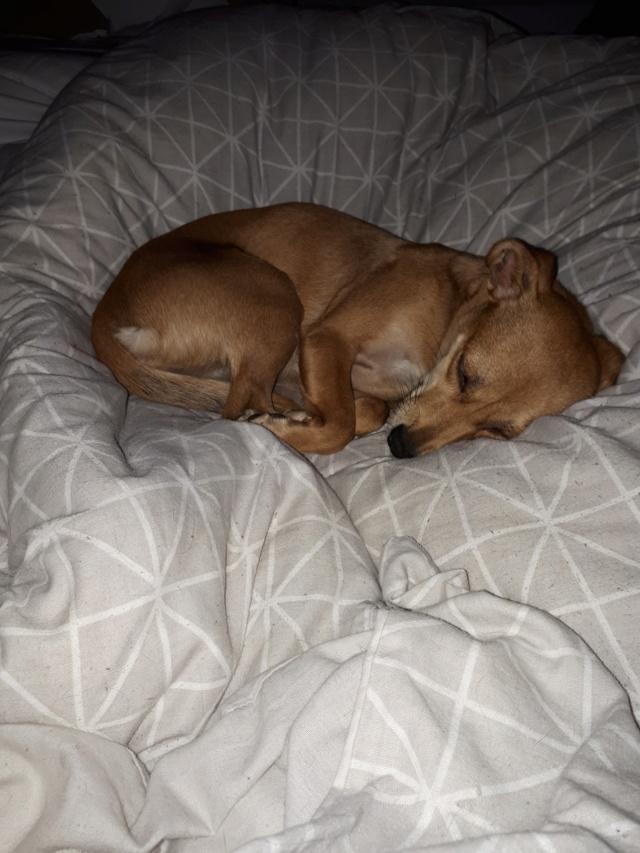 OLIVE née le 01/01/2018 - F (soeur de Floky et Zoé) - Adoptée  Olive12