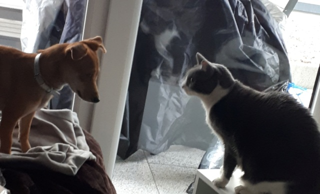 OLIVE née le 01/01/2018 - F (soeur de Floky et Zoé) - Adoptée  Olive_22