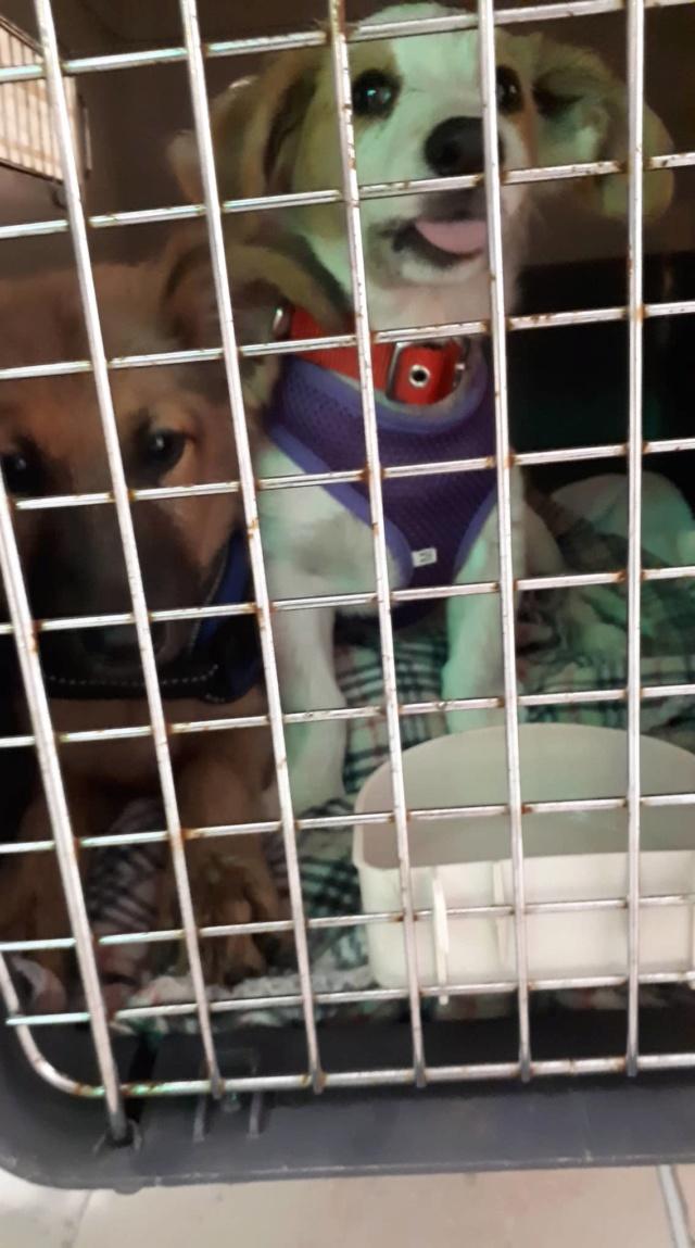 LOULA née le 01/07/2018 - F -  Adoptée département 27 Ophee_10