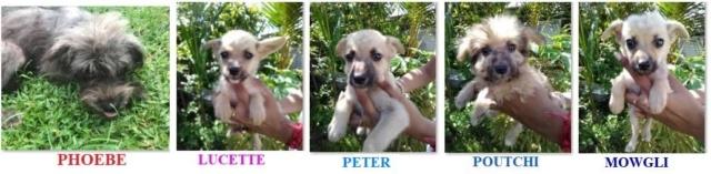 PETER né le 25/01/2019 - M Petite14