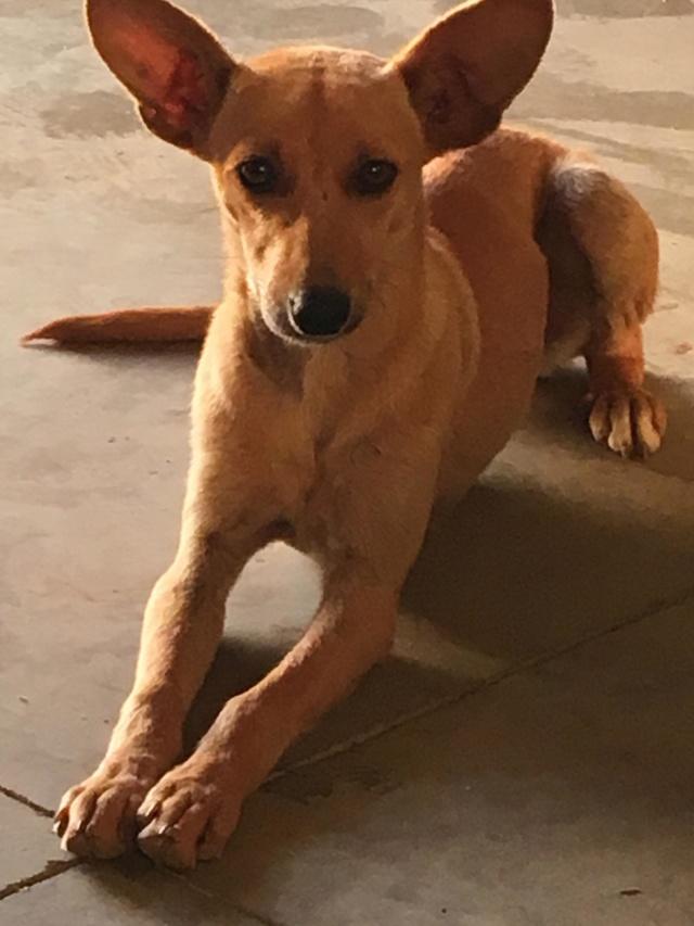 PIKA née le 01/10/2017 - F Adoptée dans le 26 Pika_410