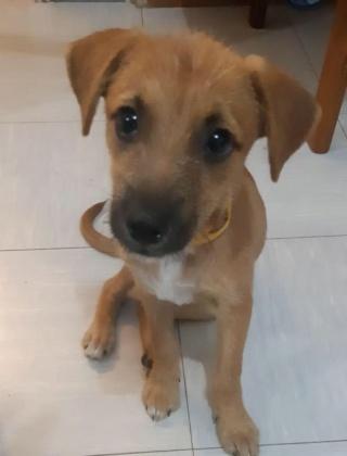 PINKY née le 01/01/2019 - F - Adoptée département 87 Pinky11