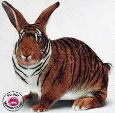 Inventivité animale Tigre-10