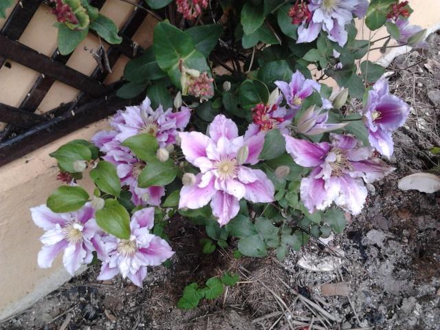 nouvelles floraisons  Photo010