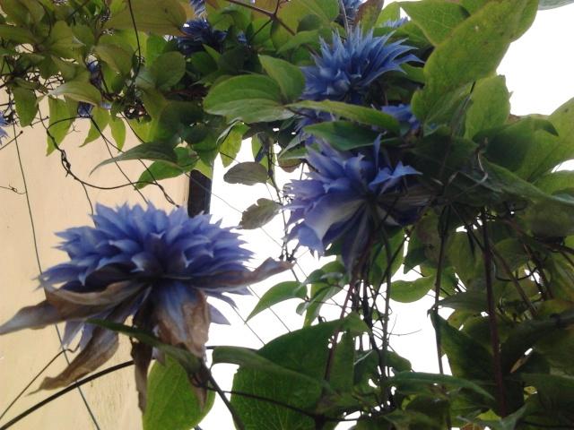nouvelles floraisons  Photo011