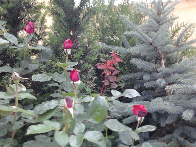 nouvelles floraisons  Photo012
