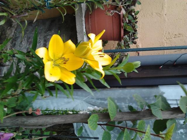 nouvelles floraisons  Photo013