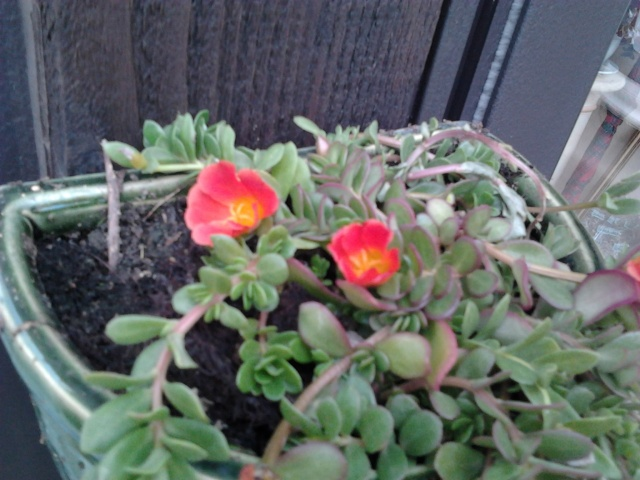 nouvelles floraisons  Photo014