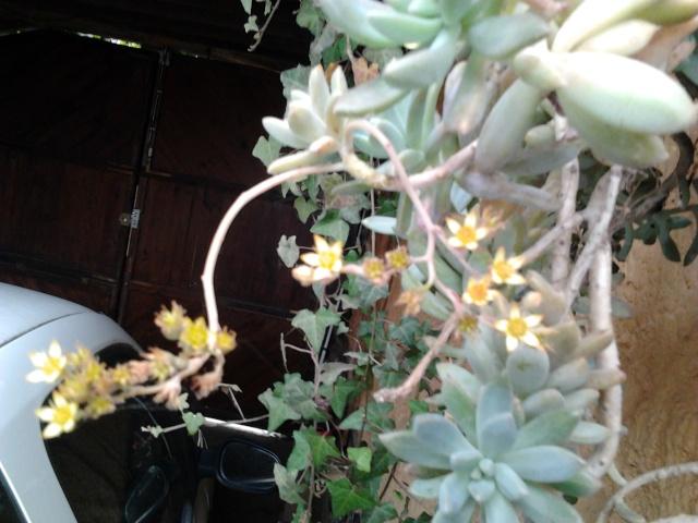 nouvelles floraisons  Photo015
