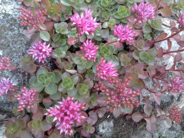 nouvelles floraisons  - Page 2 Photo029