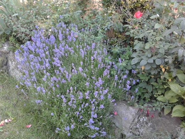 nouvelles floraisons  - Page 2 Photo031