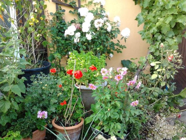 nouvelles floraisons  - Page 2 Photo032