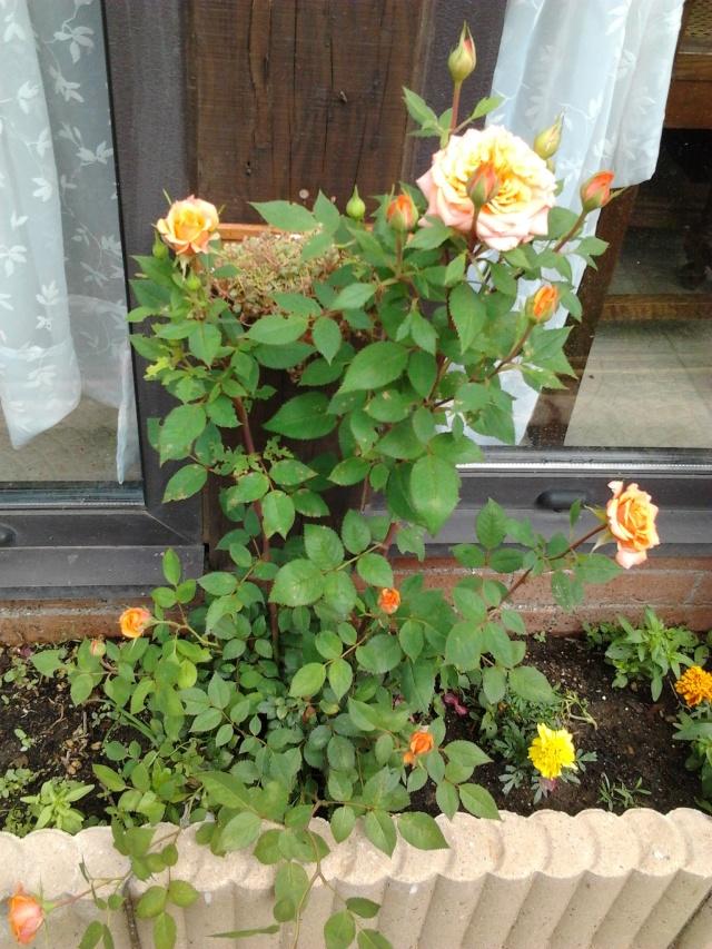 floraisons et évolutions  Photo044