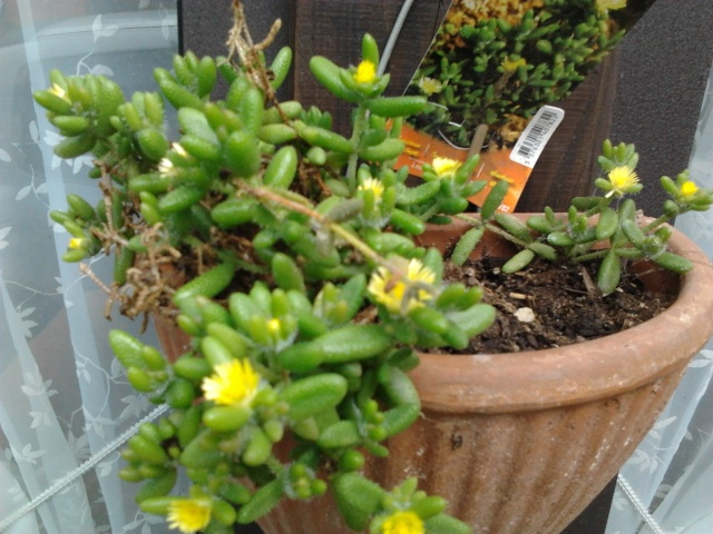 floraisons et évolutions  Photo045