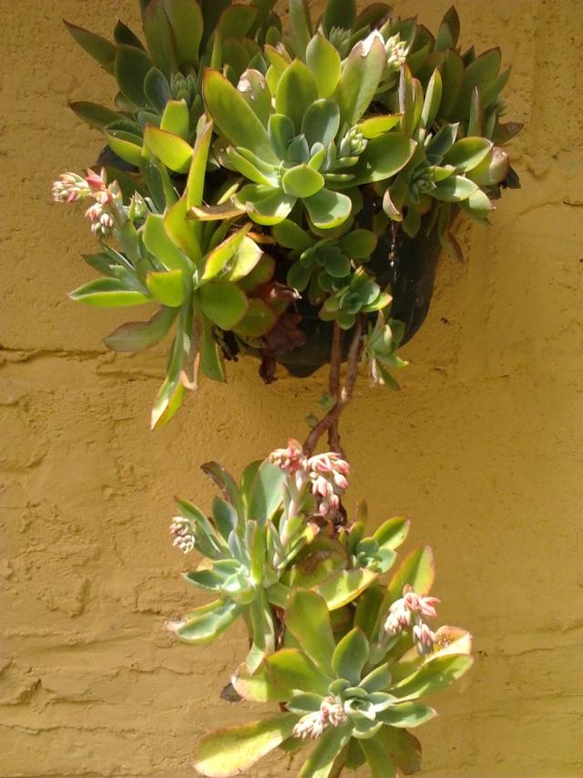 floraisons et évolutions  Photo046