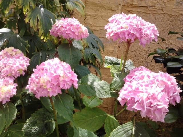 floraisons et évolutions  Photo048