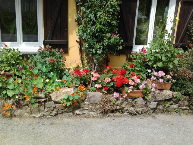floraisons et évolutions  Photo049