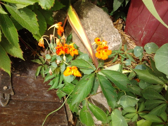 floraisons et évolutions  Photo050