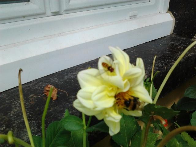 floraisons et évolutions  Photo051