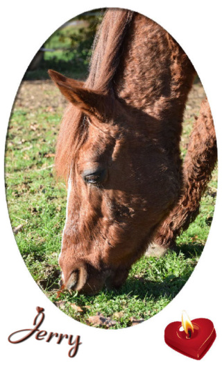 JERRY - ONC  selle (poney) né en 1991 - adopté en octobre 2015 par Patricia - Page 2 Jerry_10