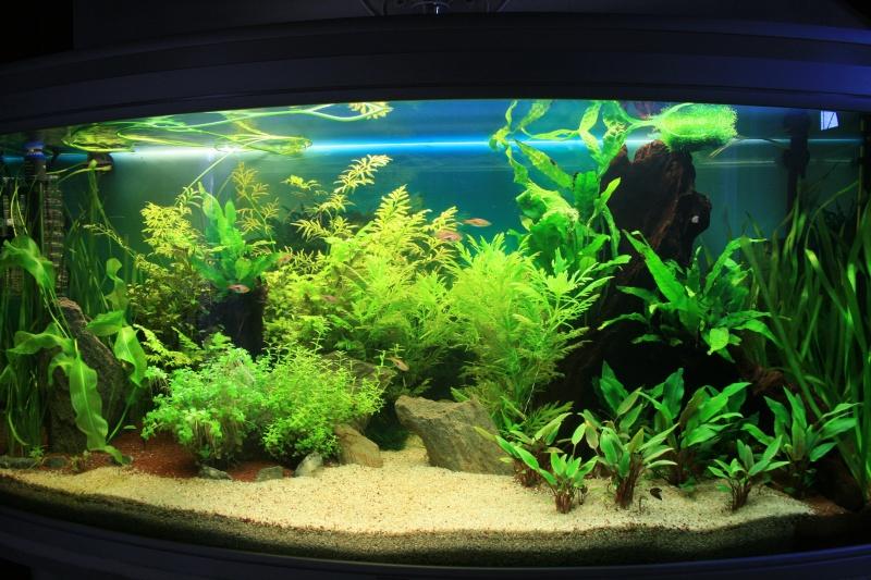 mon aquarium enfin... Img_3114
