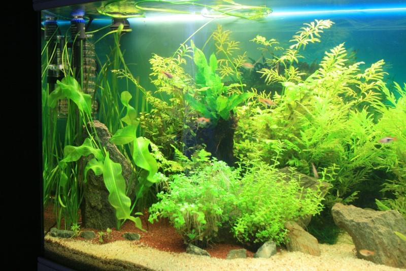 mon aquarium enfin... Img_3115
