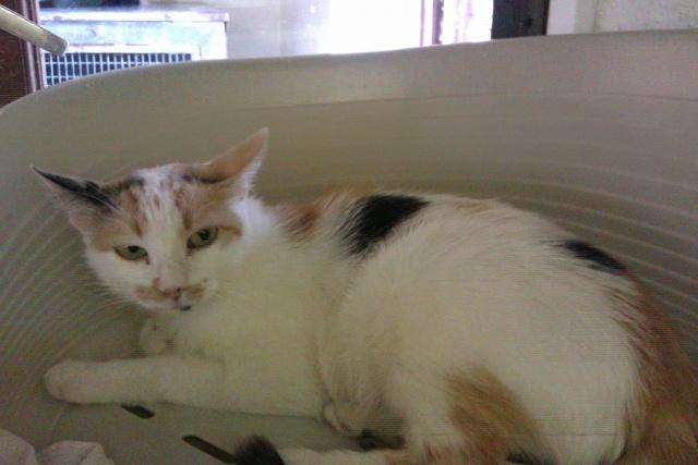 PIPA Pas adoptable 06/04/21 décédée Pipa_410