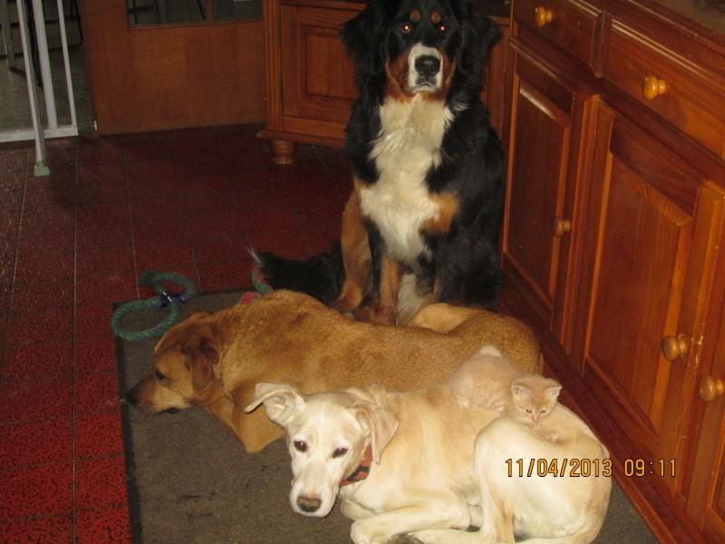 mes chiens et mon chat Nouvel10