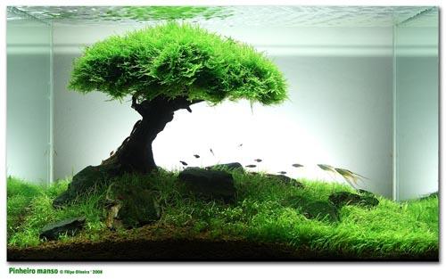 Nouvel aquarium Scaper's Tank 50 L Fab88_12