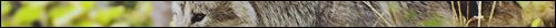 Griffe de Bronze - Le feu vagabond brûle en lui Image211