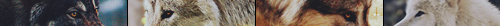 Griffe de Bronze - Le feu vagabond brûle en lui Image512