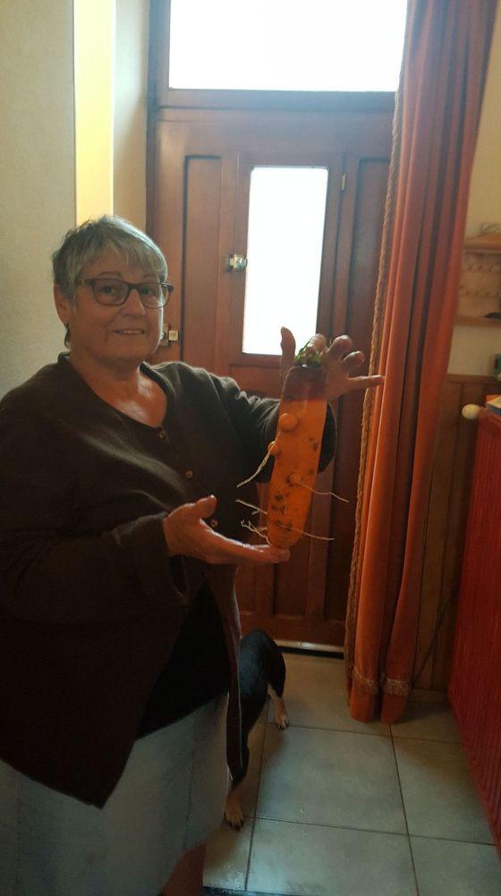 mon épouse est aller chercher des carottes de mon jardin ce matin 20191012