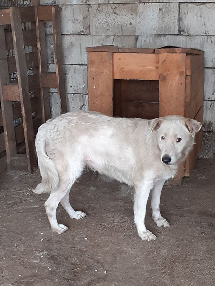 DULCE - Magnifique femelle Blanche - née en 2009 - Parrainée par Samie -SOS-FB-R-SC-  - Page 4 10004410