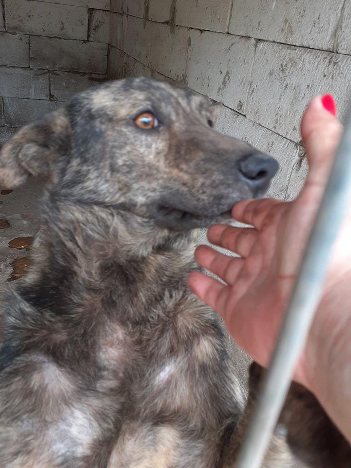 ARRY, mâle né en 2013, récupéré suite à l'avis d'expulsion du refuge de Radu- marrainé par Bouffy-R-SC-SOS 10010110