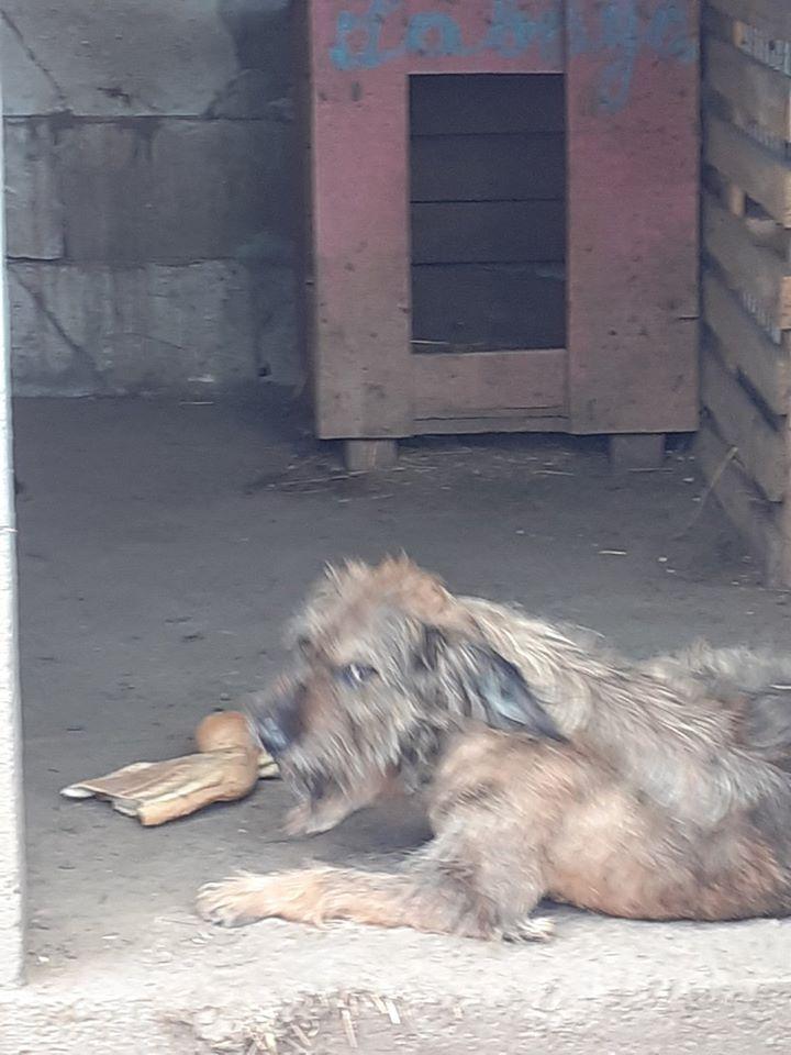BERNY,  mâle né le 09/07/2009 - Marrainé par Rostagnat - GAGE COEUR Florence B. R-SC-SOS 10080510