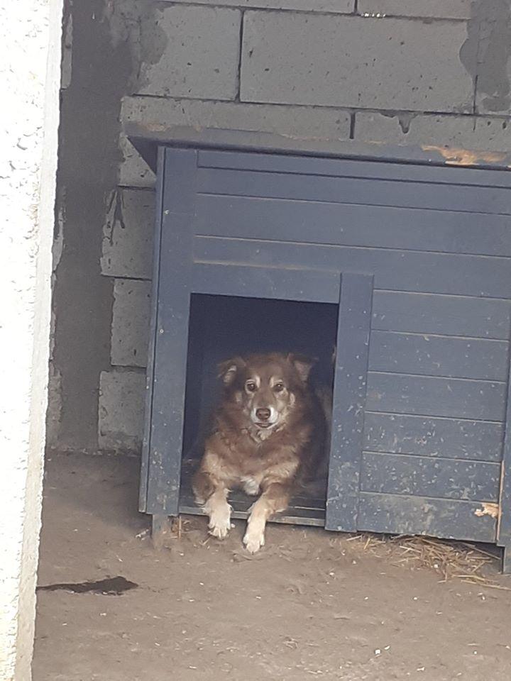 LAORA, femelle rescapée d'Oltenita du 30 avril 2015, née fin 2013, marron roux - marrainée par lilirez2 - SOS-R-SC - Page 3 10093210