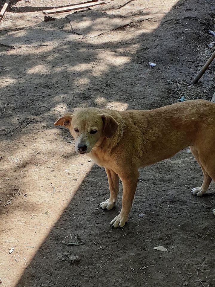 CHIROKY Petite femelle née le 13/12/2010 sauvée de l'équarrissage EN FA DANS LE 60 - parrainé par Hashleyalex-R-SOS-SC 10156012