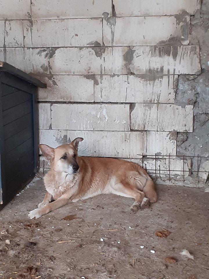 IPSY, née en 2008 sauvée de Mihailesti le 16 Avril 2018 - marrainée par Hashleyalex-R-SC-SOS 10273011