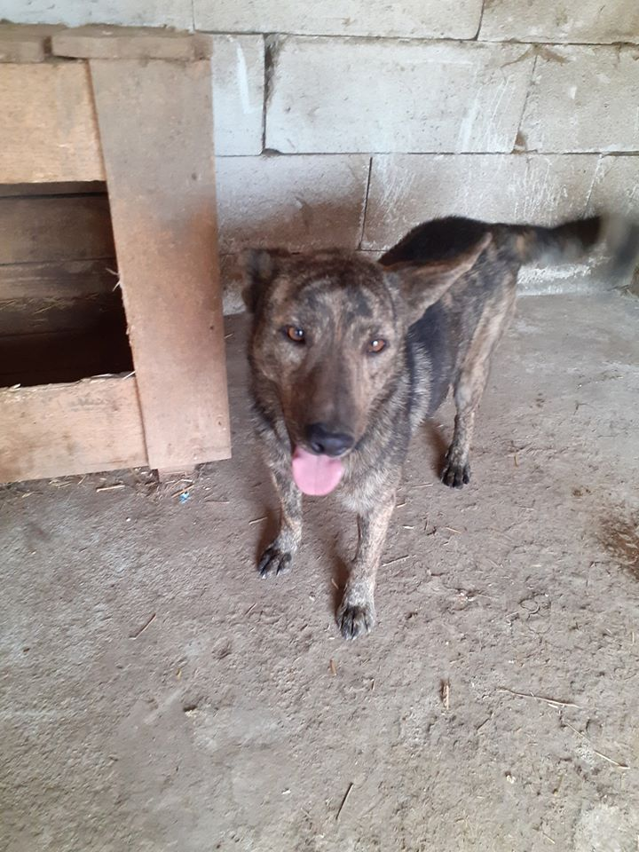ARRY, mâle né en 2013, récupéré suite à l'avis d'expulsion du refuge de Radu- marrainé par Bouffy-R-SC-SOS 10273510