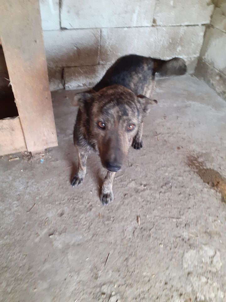 ARRY, mâle né en 2013, récupéré suite à l'avis d'expulsion du refuge de Radu- marrainé par Bouffy-R-SC-SOS 10305710