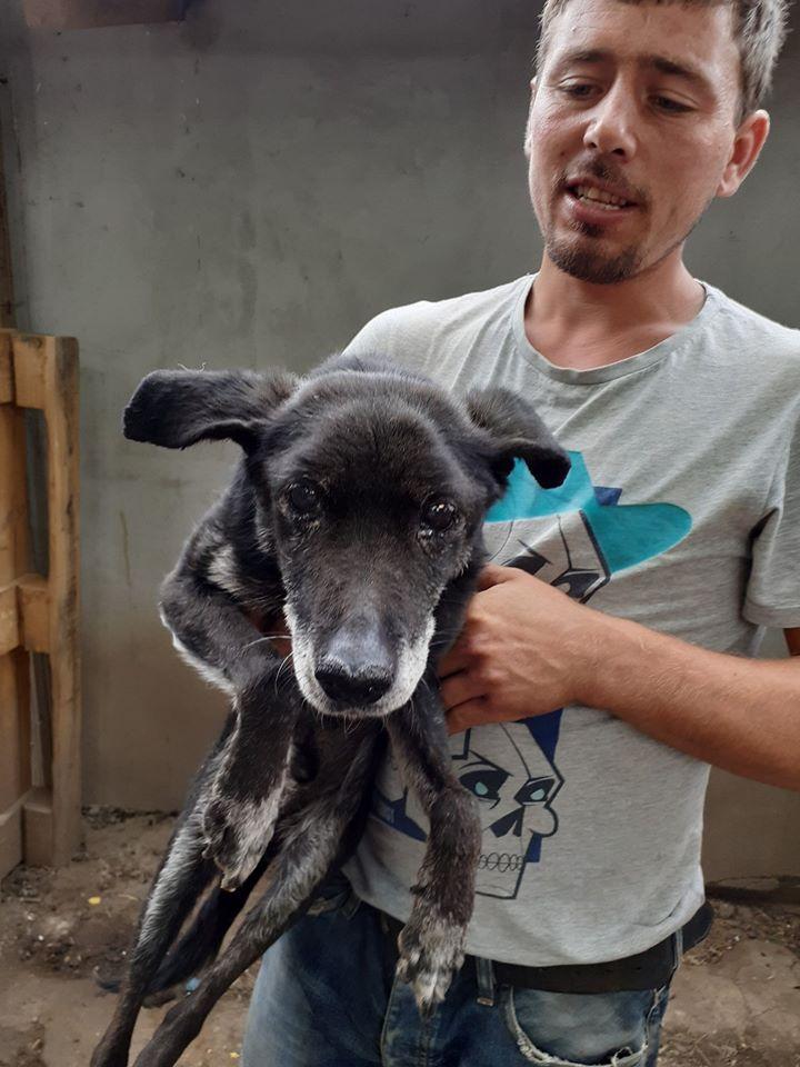 BLACHI, ratier, né en 2004 PARRAINE PAR LAIRO - FB - LBC- SOS -SC- AS - Page 9 10315410