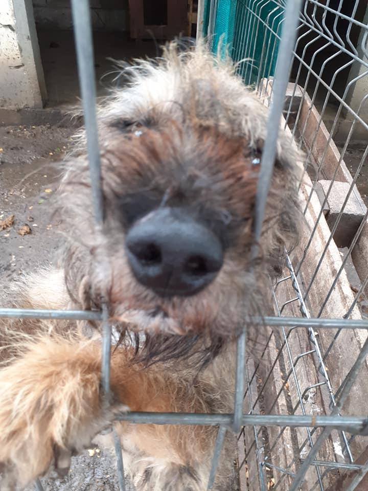 BERNY,  mâle né le 09/07/2009 - Marrainé par Rostagnat - GAGE COEUR Florence B. R-SC-SOS 10324810