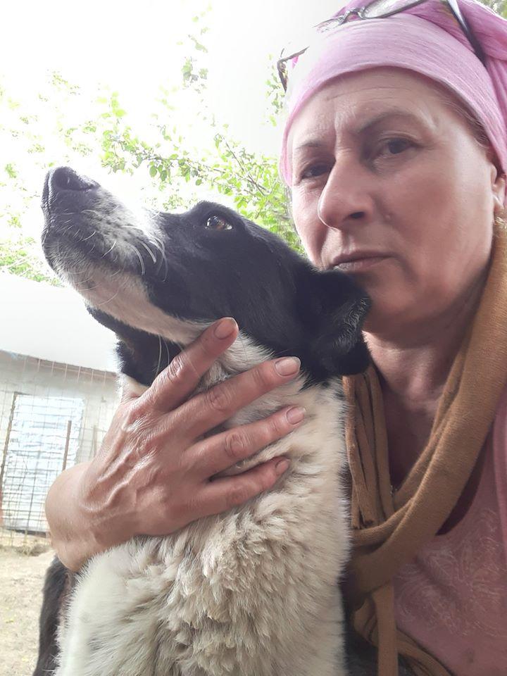 MYSTIC, croisée berger née  2014 - SAUVEE DE L'EQUARRISSAGE DE PALLADY - Marrainée par Myri-BonnieSOS-R- - Page 2 10338410
