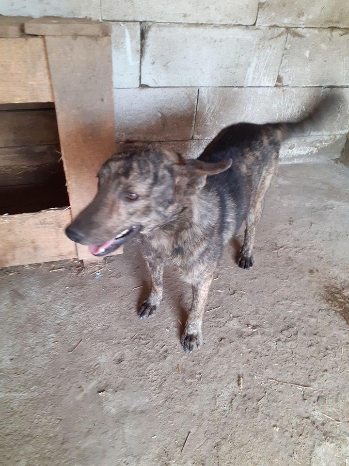 ARRY, mâle né en 2013, récupéré suite à l'avis d'expulsion du refuge de Radu- marrainé par Bouffy-R-SC-SOS 10346910